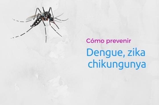 Dengue chikungunya y zika c mo eliminar criaderos de - Como eliminar los mosquitos de mi casa ...