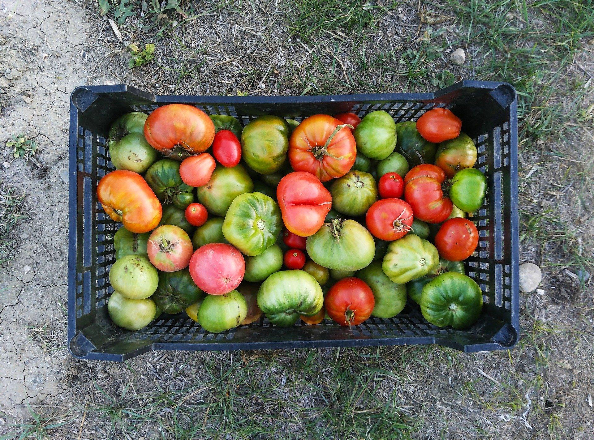 cajón con tomates