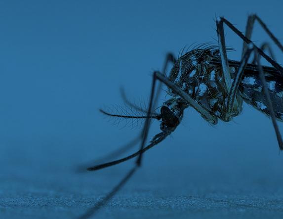 Dengue, Chikungunya, Zika
