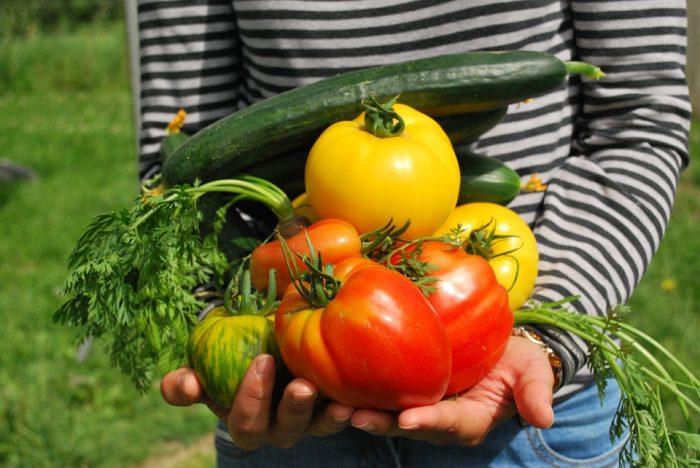 vegetales de la huerta