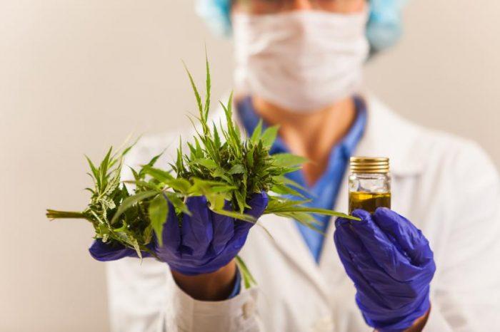 doctor muestra cannabis medicinal