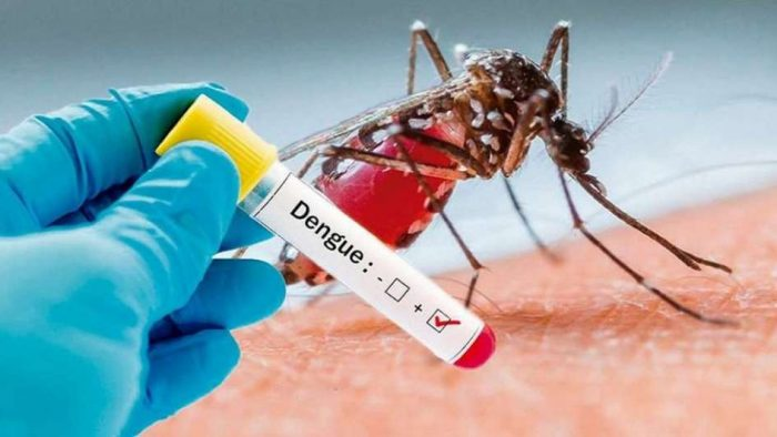 mosquito picando humano