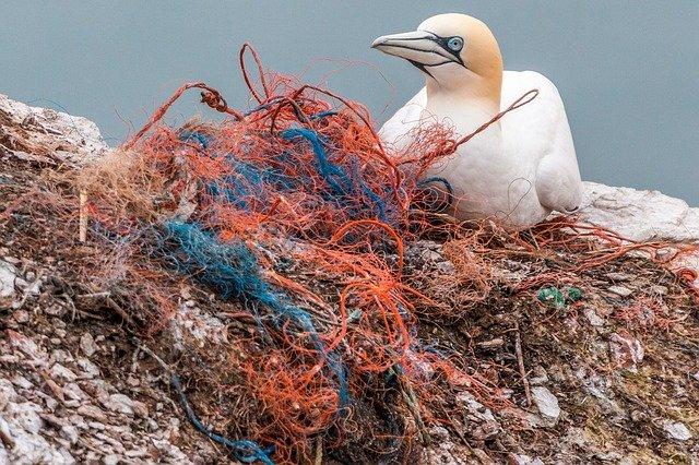 pato con plasticos en el mar