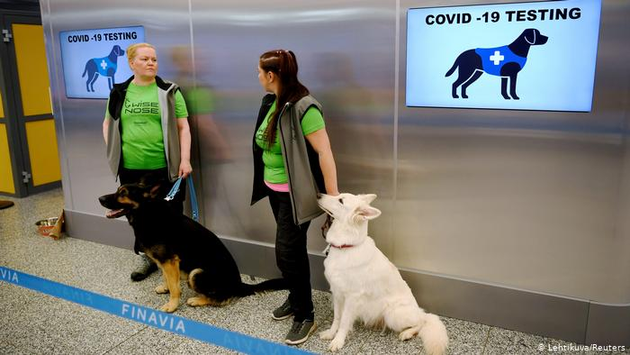 perros para detectar COVID-19