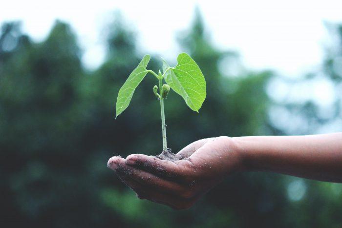 brote agroecológico sostenido en una mano